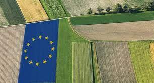 Pnrr agricoltura, stanziati 500 milioni di euro per innovazione imprese